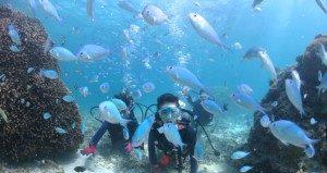 宮古島の熱帯魚を間近で観察できるビーチ体験ダイビング