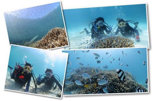 宮古島の海で潜る体験ダイビング