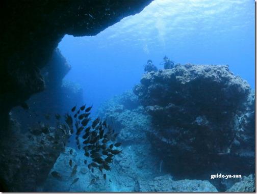 宮古島の海中絶景巡り