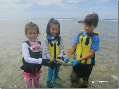 宮古島の海で見たナマコ