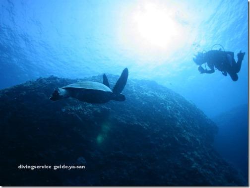 宮古島のウミガメとダイビング