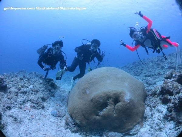 宮古島の海とサンゴ